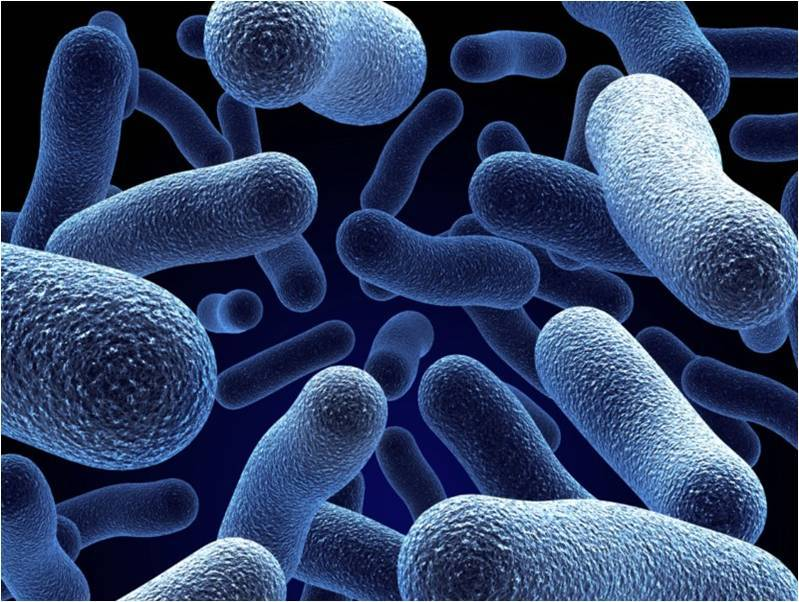 bakterie probiotyków