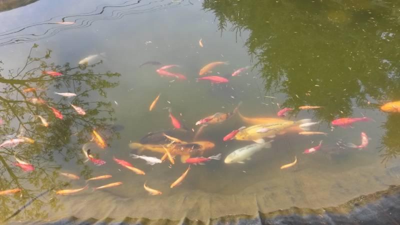 staw pełen ryb