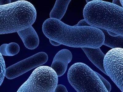 Bakterie probiotyk