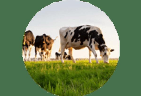 chów i hodowla zwierząt