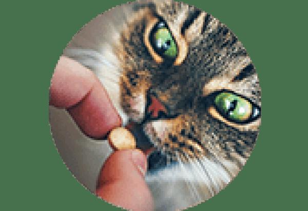 Probiotyki dla zwierząt